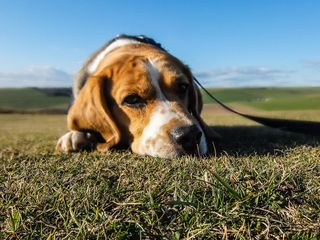 Animal-dog-pet-sad