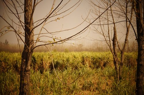 2015-04-Life-of-Pix-free-stock-photos-fields-nature-trees-mist-aman-goyal